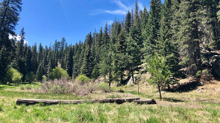 Photo of pine trees by Stephanie Klepacki on Unsplash